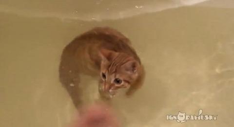 猫 お風呂ですいすい泳ぐ00