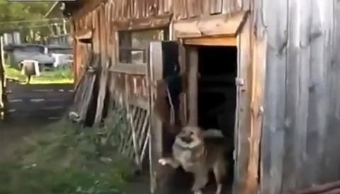 犬 小屋のドアを閉じる06