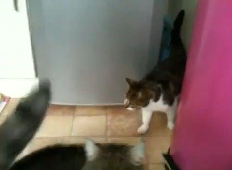 猫 冷蔵庫の間を垂直歩き05