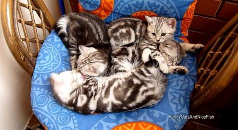 猫 椅子の上でのんびり4匹03