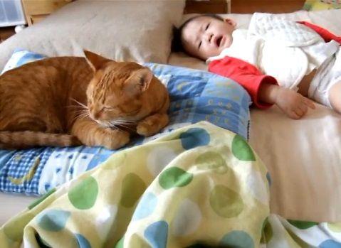 猫 赤ちゃんをペロペロ05