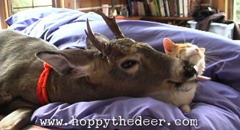 猫 鹿と仲良し02