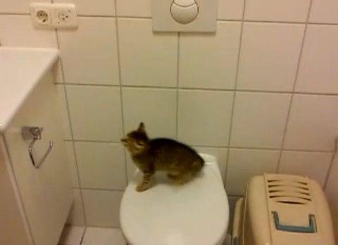 子猫 便座からジャンプ・・・00