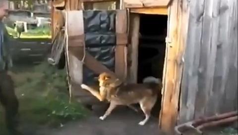 犬 小屋のドアを閉じる05