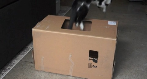 猫 箱を出たり入ったりな2匹05