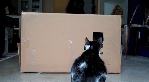 猫 箱を出たり入ったりな2匹03