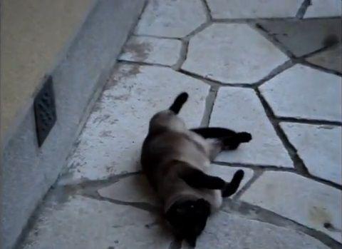 猫 rollで回転する03