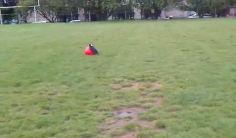 犬 大きなボールを追いかけて跳ね飛ばされる02