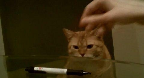 猫 ペンを机から落とす02