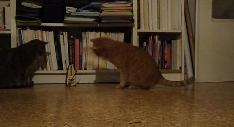 猫 メトロノーム06
