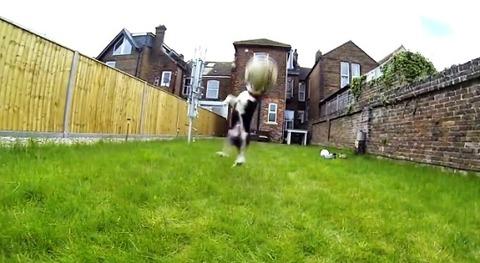 子犬 ボールにアタック・・・02