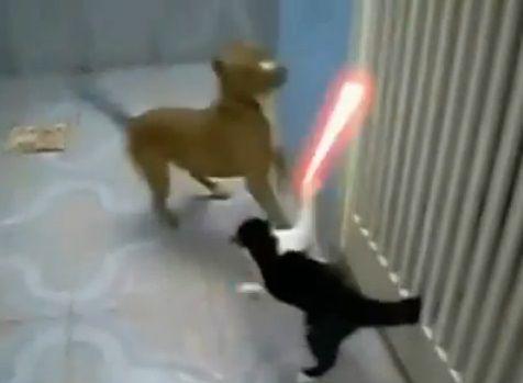 犬猫 sith 01