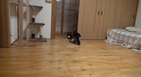 猫 雷の音で逃亡01