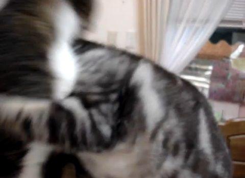 猫 ラリアット05