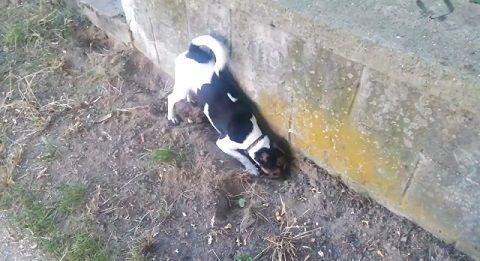 犬 穴掘りどんどん00