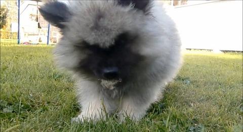 子犬 vsタンポポ07
