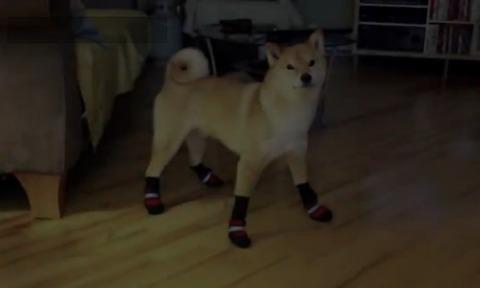 柴犬 靴下00