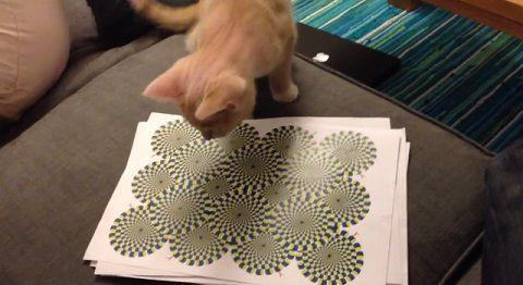猫 錯視画像に反応00