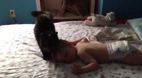 猫 赤ちゃんにスリスリ03