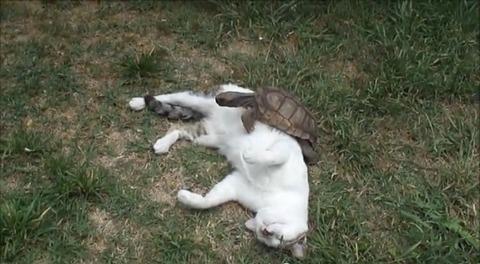 猫 亀にマッサージ03
