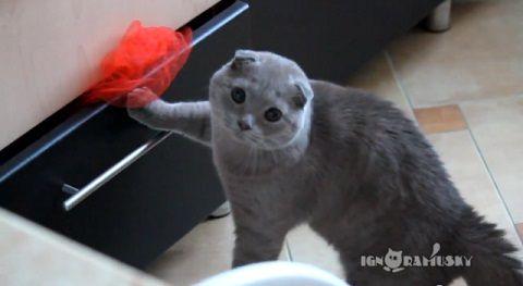 猫 見られてるのに気づいたドロボー猫07
