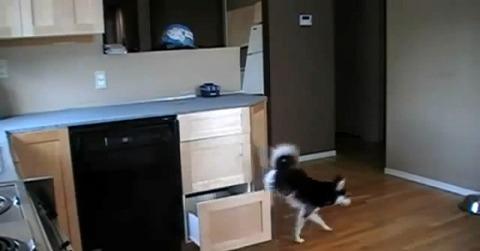 犬 キッチンの引き出しで04
