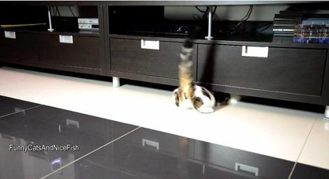 猫 家具の下まで04
