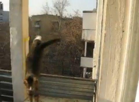 猫 三角飛び05