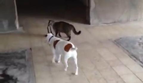 猫が犬をリードで04