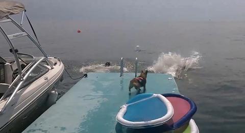 犬 コーギージャンプ00