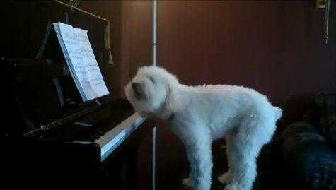 犬 piano 弾語り11