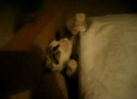 子猫 ベッドイン05
