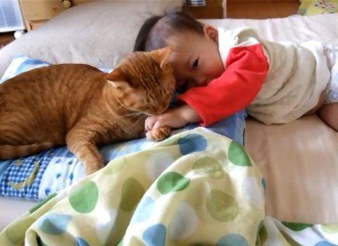 猫 赤ちゃんをペロペロ04