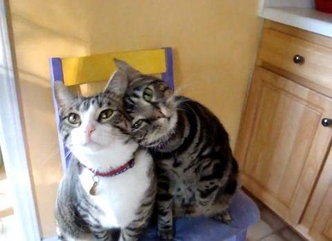 猫 かわいい仕草で餌ちょうだい08