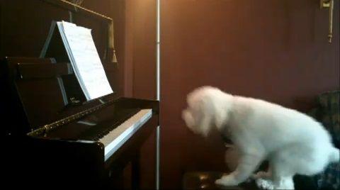犬 piano 弾語り01