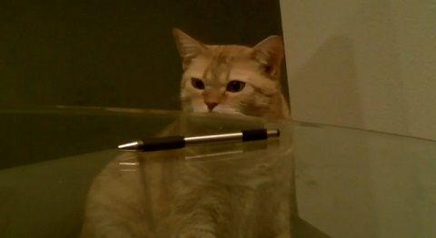 猫 ペンを机から落とす00