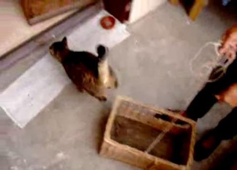 猫 ねこベーターその二 05