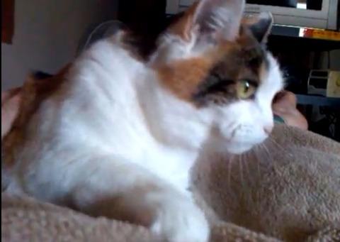 猫 毛布をモミモミ03