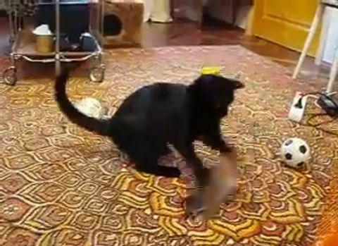 猫 vsオコジョ04