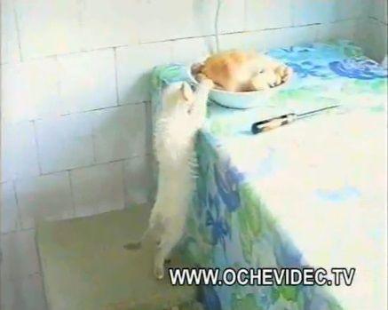 子猫 チキンを丸ごとかっぱらい02