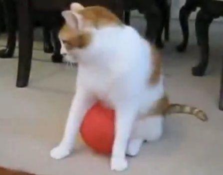 猫 風船00