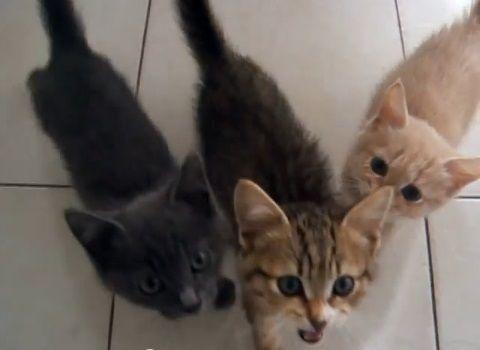 子猫 餌に群がる04