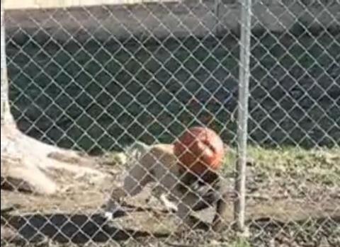 犬 ボールを頭に05