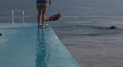 犬 コーギージャンプ03