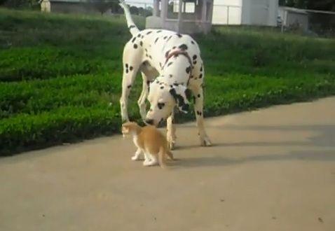 犬猫 その1 06