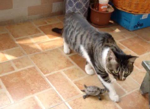 猫 小亀に好かれる04