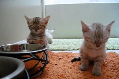 子猫 2匹そろってウトウト01