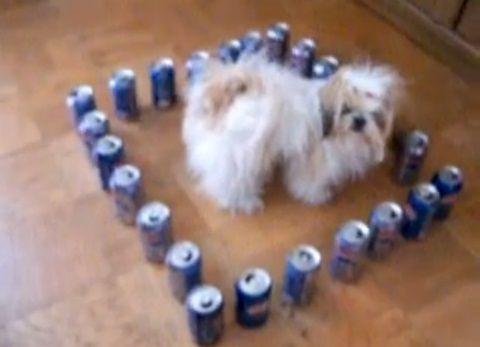 犬 ペプシの結界02