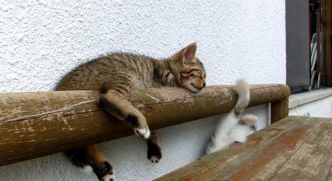 子猫 寝ている子猫に遊んで欲しい05