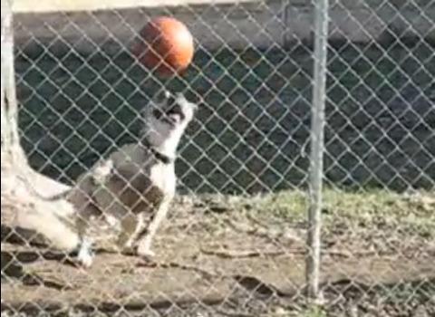 犬 ボールを頭に06